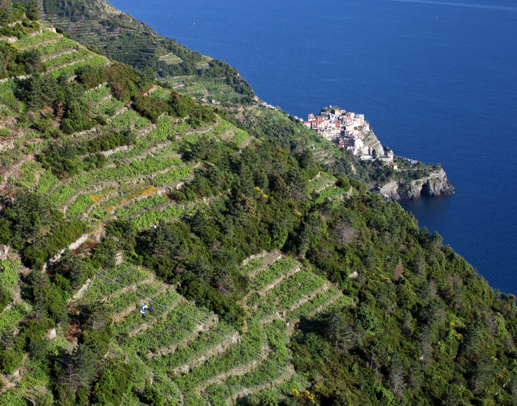 Vineyards above Manarola